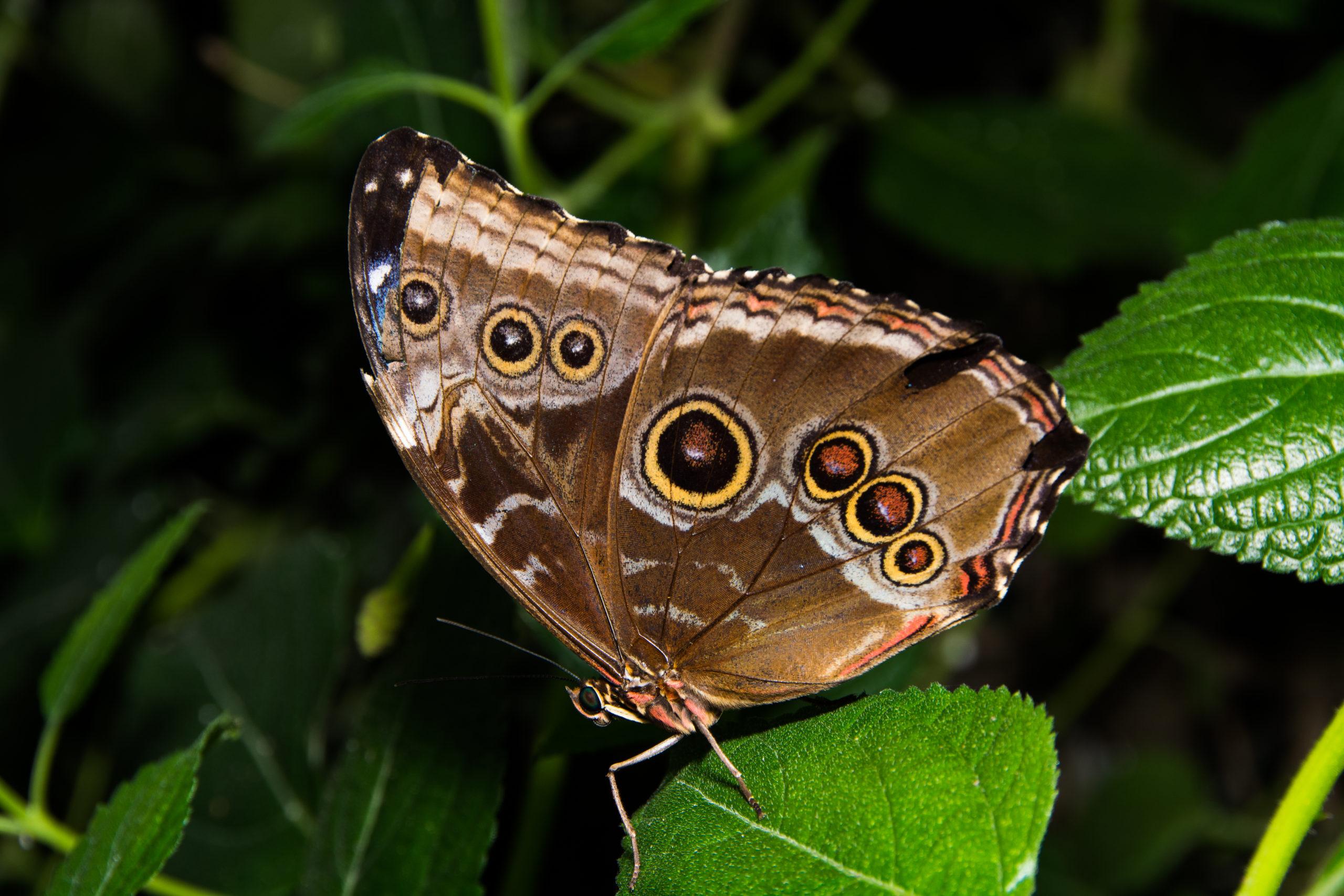 Vlinder in de vlindertuin.